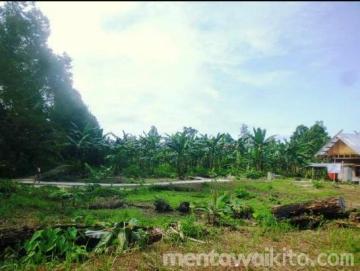 Petani Pisang Dusun Matobat Kesulitan Menjual Pisang