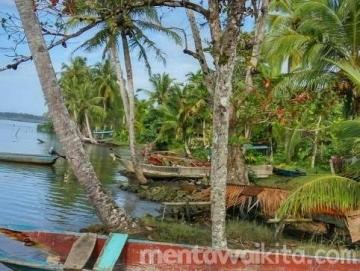 Abrasi Pantai Ancam 48 Rumah Warga Muara Taikako Timur Sikakap