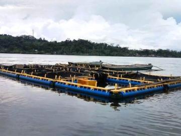 KKP Mentawai Perlu Disediakan Kapal Pengangkut Ikan Hidup Kerapu