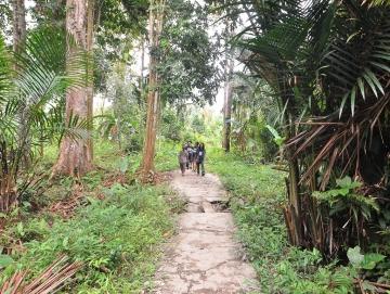 Pembangunan Jalan Trans Mentawai di Siberut Selatan Dilanjutkan Tahun Ini
