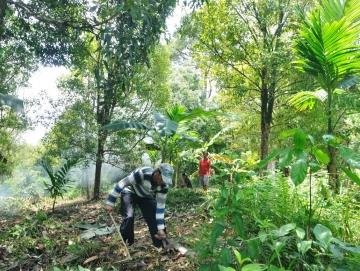 Cengkeh dan Pinang Komoditi Andalan Petani Siberut Tengah