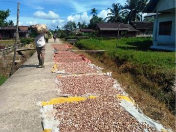TPID Siberut Tengah Targetkan Pinang Jadi Produk Unggulan Desa
