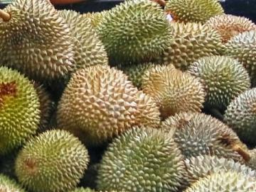 Musim Durian Membawa Berkah