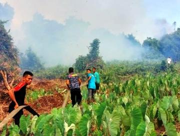 Perladangan Warga di Matobe Sikakap Terbakar
