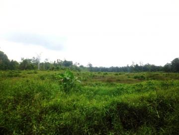 Puluhan Hektar Sawah di  Taikako Kekeringan