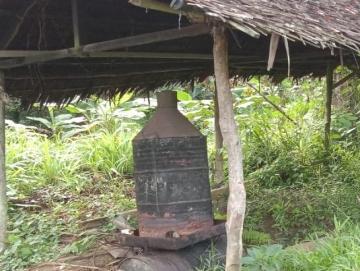 Harga Minyak Nilam Naik Jadi Rp 550 RibuKg di Mentawai