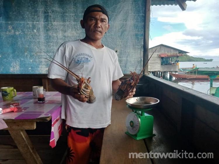 Gegara Virus Corona Lobster di Sikakap Kehilangan Pembeli