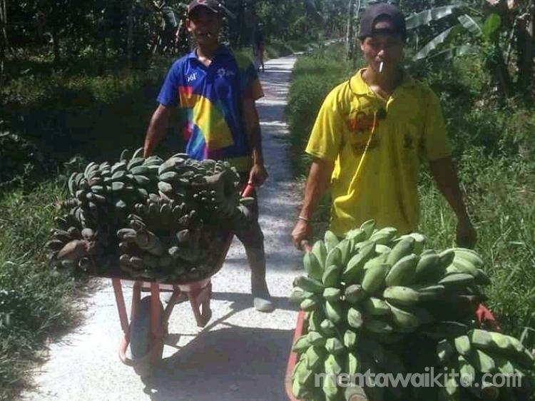 Warga Dusun Beikkeiluk Budidayakan Pisang Medan