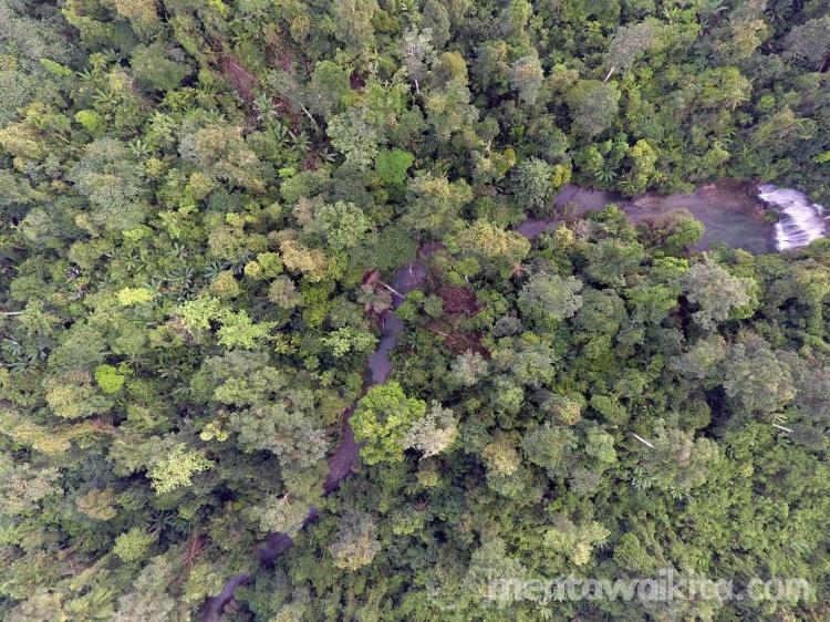 Ranperda Revisi RTRW Mentawai Potensial Hambat Perluasan Hutan Adat Mentawai