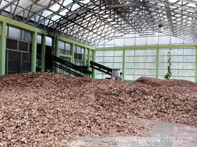 Pembangkit Listrik Biomassa Bambu Berbahan Bakar Solar