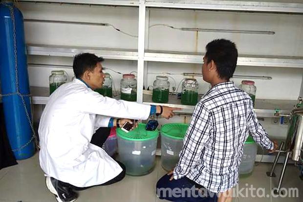 Jalius Bercitacita Ciptakan Bahan Bakar Minyak dari Microalgae di Mentawai