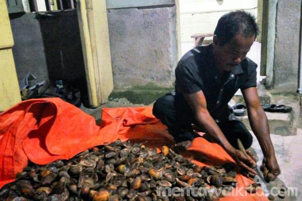 Toni Zalukhu Sukses Menyekolahkan Anak dari Hasil Pinang