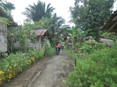 BPBD Mentawai Minta Masyarakat Inisiatif Bersihkan Jalan Evakuasi