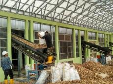 Listrik Biomassa Bambu Diuji Memakai Bahan Bakar Kayu