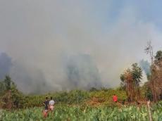 Dalam Dua Bulan 60 Hektar Lahan Terbakar di Pagai