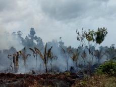 Atasi Kebakaran Hutan Kalaksa BPBD Mentawai Minta Tingkatkan Pengawasan Dusun