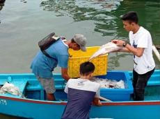 Nelayan Silabu dan Saumanganya Tempuh Perjalanan 6 Jam Jual Ikan