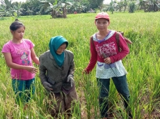 Hujan Turun Warga Desa Matobe Kembali Bersawah