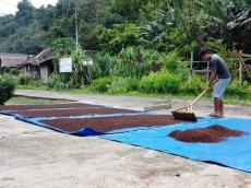 Harga Cengkeh di Siberut Turun Tajam