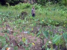 Menata Ulang Keadilan Agraria Catatan Refleksi 60 Tahun Hari Tani
