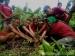 Dukung Penyelamatan Hutan Siberut Rieke Diah Pitaloka dan Pegiat Lingkungan Tanam Pohon