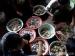 Makna Tradisi Iban Toga di Siberut Utara