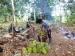 Petani Matobe Raup Ratusan Ribu dari Panen Durian