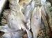 Harga Jual Ikan Kering Bose Masih Rendah