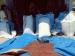 Terdampak Corona Harga Cengkeh di Sikakap Anjlok