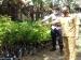 Warga Muntei  Mendapat 1200 Bibit Cengkeh dari Dinas Pertanian Mentawai