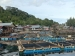 Nasib Nelayan Keramba Jaring Apung Diberi Bantuan Tapi Tak Ada Penampung Ikan