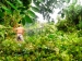 Pohon Tumbang Jaringan Listrik Ratusan Pelanggan di Sikakap dan Pagai Utara Padam