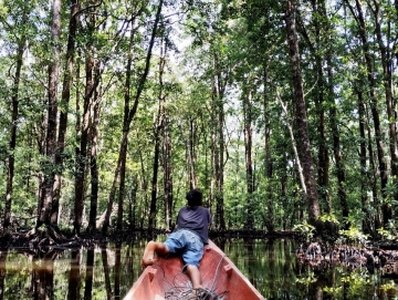 Indahnya Hutan Bakau Sibuddaoinan