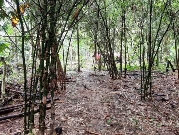 Sulitnya Mewujudkan Listrik Energi Bambu di Mentawai