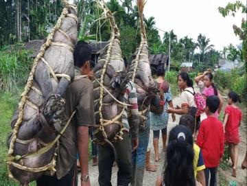 Mempertahankan Tradisi Pakandei di Tengah Mahalnya Biaya Penyelenggaraan